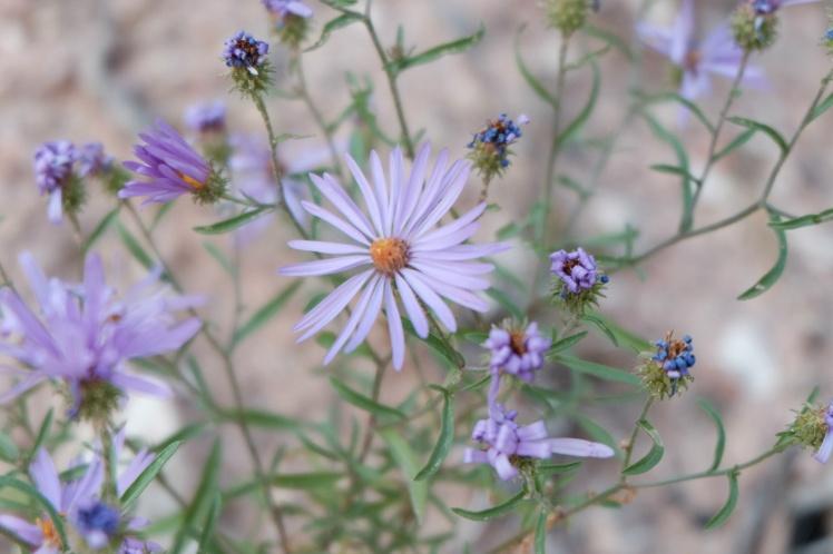 catori-life-style-blog-lovestitch-clothing-boho-blog-bohemian-style-flowers